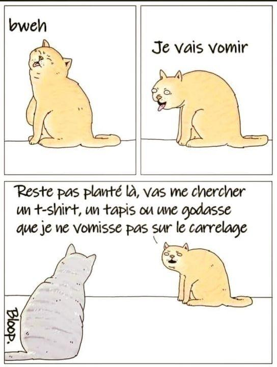 Chat qui vomit