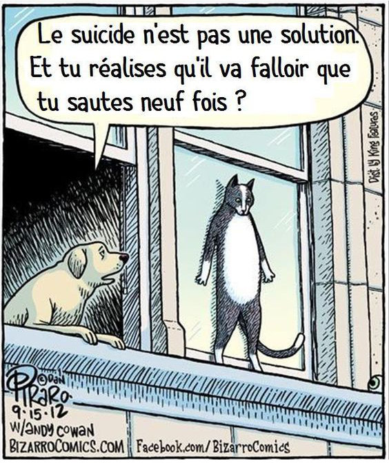 Chat suicidaire
