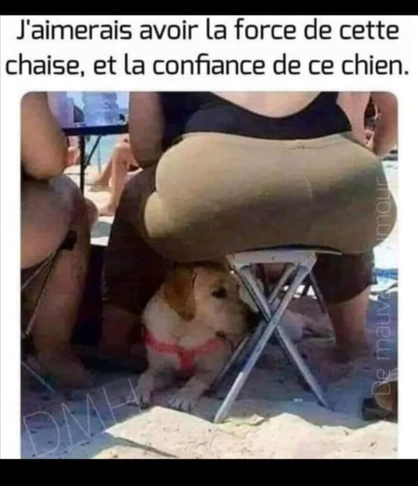 Un chien exeptionnel